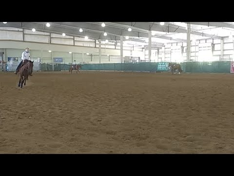 2017 Lancaster County Super Fair - 4-H Western Horse Show (already is progress)