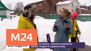 Как спастись от стаи разъяренных собак - Москва 24