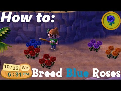 How to: Breed the BLUE Rose ACNL