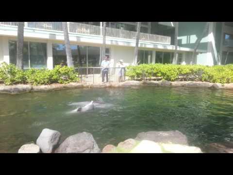 [Traveller K]kahala hotel dolphin Hawaii, 카할라 호텔 돌고래, 오바마 이영애