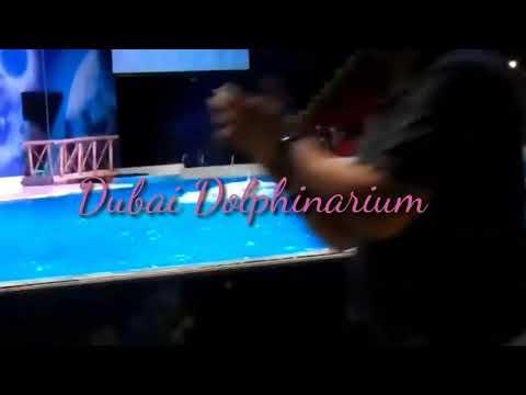 #Dubai Dolphinarium