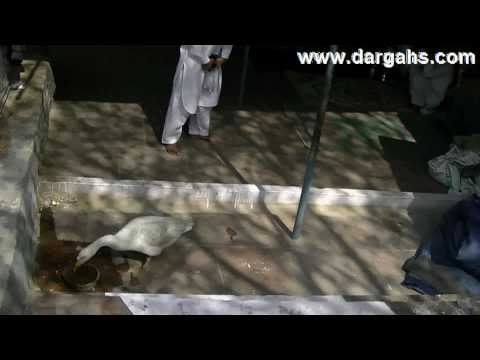 Hazrat Ashiq Allah ( Rahmatullah Allaih ) # Part 2 # Sufi saints of India, Delhi