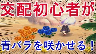 【とび森】花の交配初心者でも青バラは咲かせられます!【PART111】