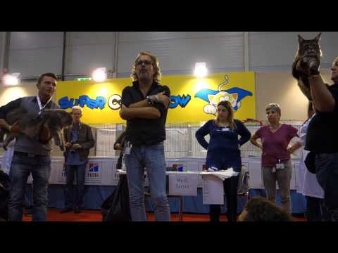 Roma Cat Show 2013 Maine Coon winner Pablo Escobar