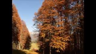 Melodie d'autunno - immagini di Lucia