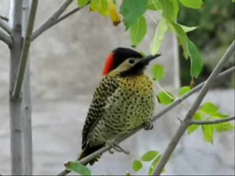 TEST WITH CANON SX 20 Is VIDEO - AVES  DE ARGENTINA