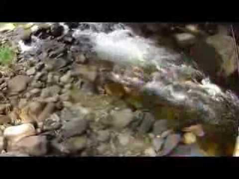 大塩川 イワナ - YouTube