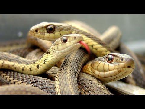 Змеи в Крымских горах