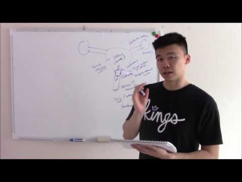 USMLE Reproduction 1 Introduction to the Female Reproductive System