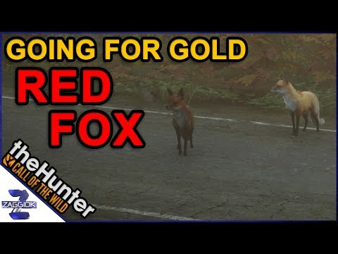 Going for Gold RED FOX Call of the Wild