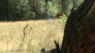 опасность в лесу