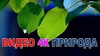 Видео  природа 4к UHD Самое красивое видео