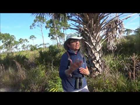 Pine Island Flatwoods Preserve Nature Tour Part 1