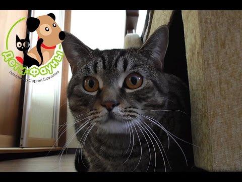 У кошки понос, что делать? Основные причины поноса у кошки