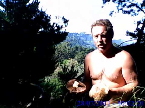 A R A   IN AURORA 1400+feet Strawberry Canyon E Knob Idl29a0756TN