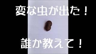 変な虫が出た! thumbnail