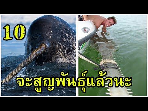 10 อันดับ สัตว์ทะเลใกล้สูญพันธุ์ กูจะหมดโลกแล้วดูแลกูหน่อย
