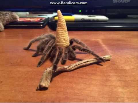 Tarantula Wizard Boss Battle Theme