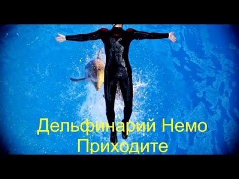 Dolphinarium Nemo In Yerevan