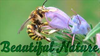 Потрясающе красивая природа - релакс и позитив! Макро съемка. Видео YouTube(Потрясающе красивая природа - релакс и позитив! Макро съемка. Смотрите музыкальное видео YouTube о природе..., 2013-06-17T08:41:53.000Z)