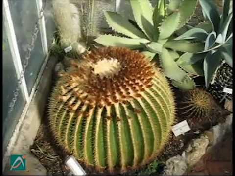 Come annaffiare le piante grasse doovi for Innaffiare aloe vera