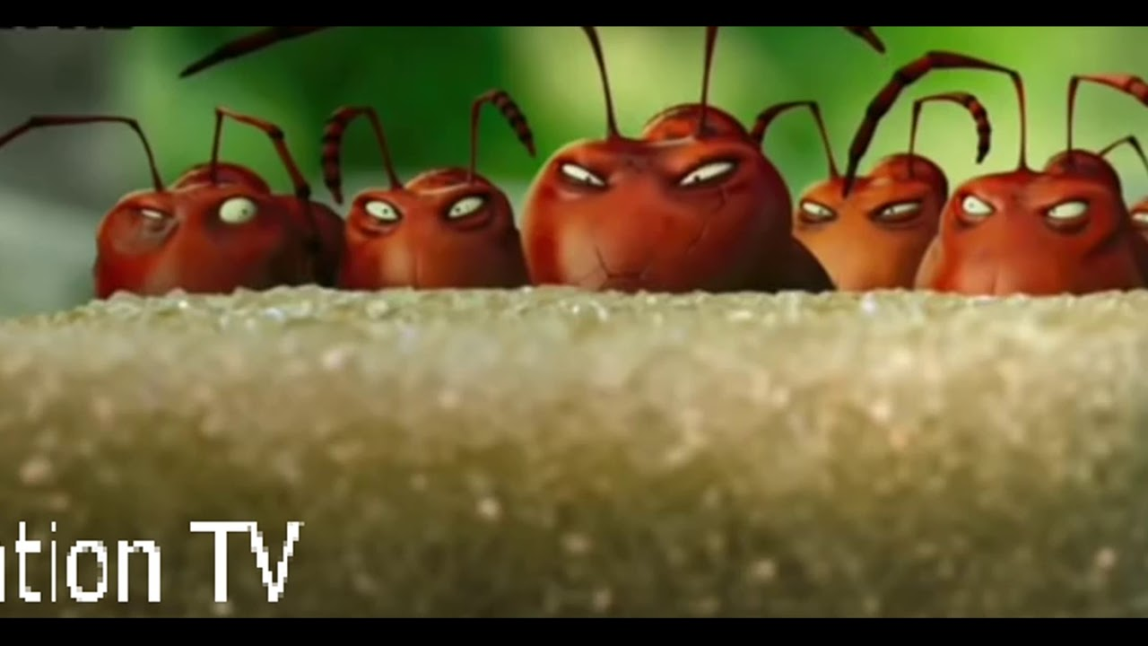 Download Funny Ant fight red and black ants fight animated cartoons for kids.Animation TV