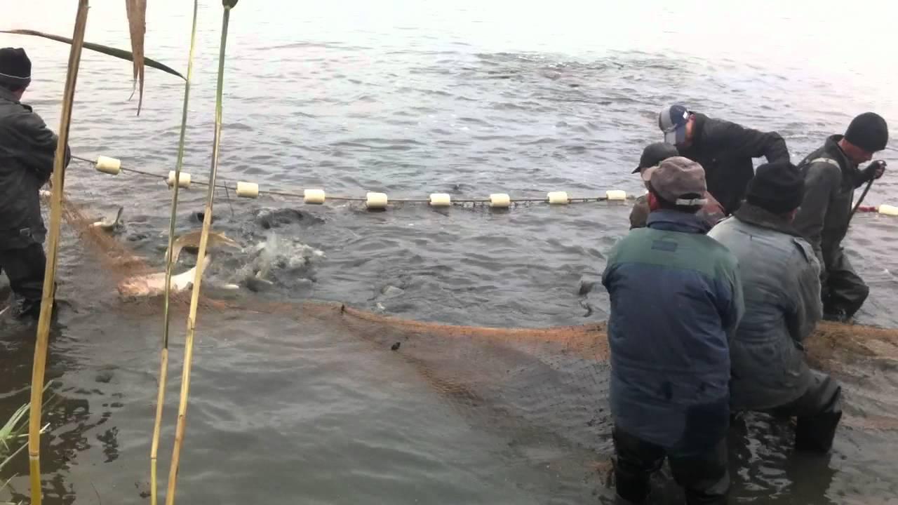 веслонос рыба как ловить