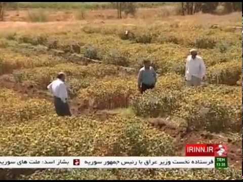 Iran Medicinal plants used in Persian traditional medicine ا