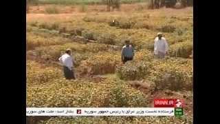 Iran Medicinal plants used in Iranian traditional medicine استفاده گياهان دارويي در پزشكي سنتي ايران