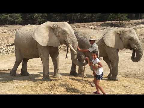 Aitana Safari Park \ Spain \ Valencia \ Alicante \ Torrevieja With CC