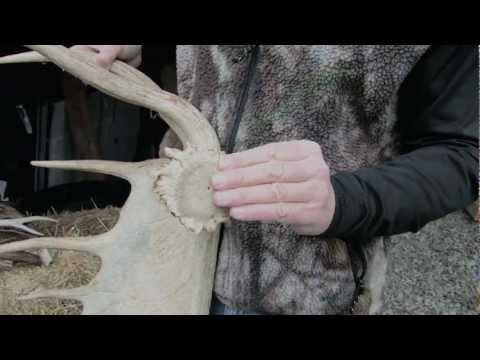 Antler Shed: How it works