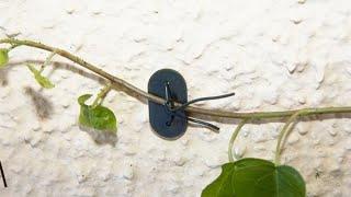 Amarres para plantas trepadoras - Bricomanía
