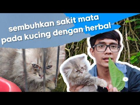 cara-menangani-kucing-yang-sakit-mata-dengan-tanaman-herbal