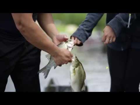 White Bass Fishing   Fremont, WI