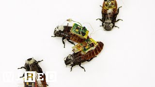 Cyborg Cockroaches Could Save Your Life | Cyborg Nation