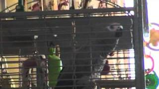 "Benny the Parrot whistles Colonel Bogey and McDonalds ""I"