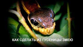 Как сделать из гусеницы змею