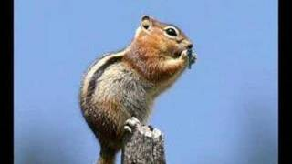 "Chipmunk Sings ""We Will Rock You"""