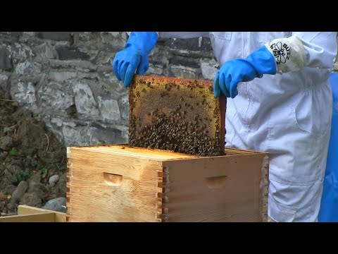 VIDEO: The Blessing of the Bees - Ancient Irish tradition resurfaces in Dublin