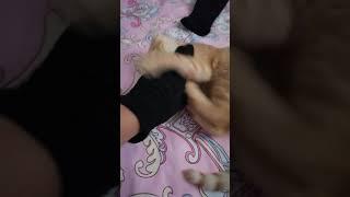 Котенок кусается как собака