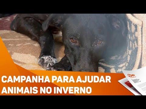 Campanha para ajudar animais no inverno - TV SOROCABA/SBT