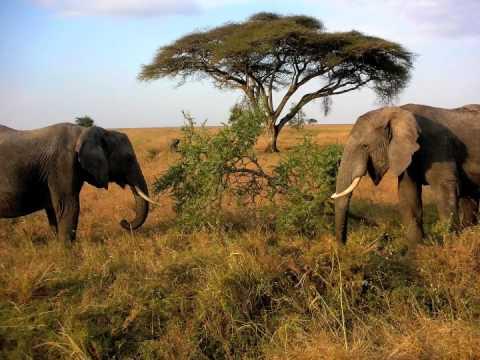 The Heat Report - Tanzania