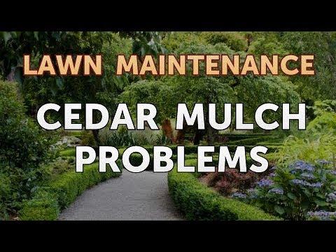 Cedar Mulch Problems Youtube