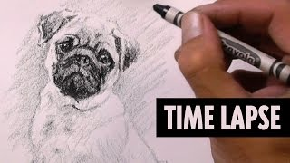 Pug Puppy Drawing With A Crayon Time Lapse