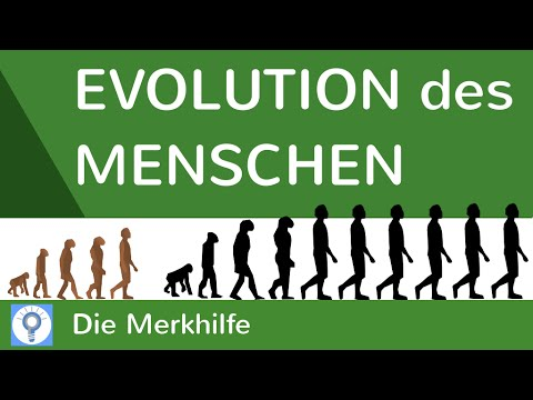 evolution des menschen einfach erkl rt wasseraffen savannentheorie evolution 25 youtube. Black Bedroom Furniture Sets. Home Design Ideas