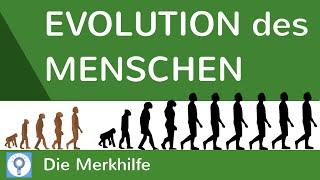 Evolution des Menschen - einfach erklärt! + Wasseraffen- & Savannentheorie   Evolution 25