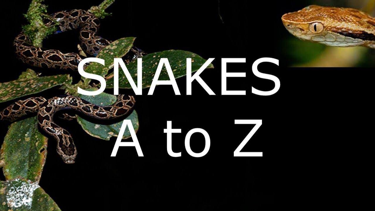 Snakes  A To Z  Snakehunterstv  Youtube