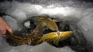 WEIRDEST Fish Through The Ice!