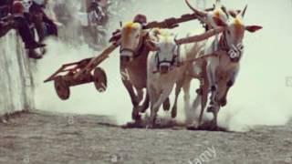 Vishnav shirole  बैलगाडा  short film