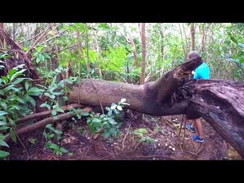 Manoa Falls Trail Honolulu Oahu Hawaii Waterfalls Are Natures Symphony